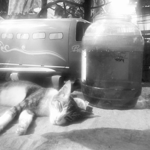Fish Cat Piskat nge