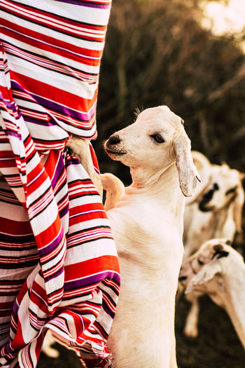 Drought Goat Kenya Africa Cattle Climate Change Close-up Cow Day Domestic Animals Fur Herd Animal Livestock Maasai Mammal Masai Men Nature One Animal One Person Outdoors Pets Real People Traditional An Eye For Travel Business Stories EyeEmNewHere