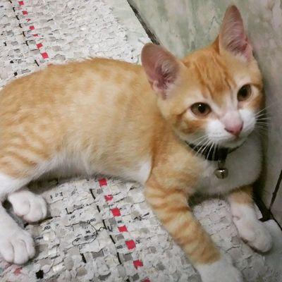 DiárioDeAslan : A coisa felpuda maaaaaaaais gostosaaa do mundo! 😍 Tem como não se apaixonar? *--* Instafofura Instapet Instacat felinos gato