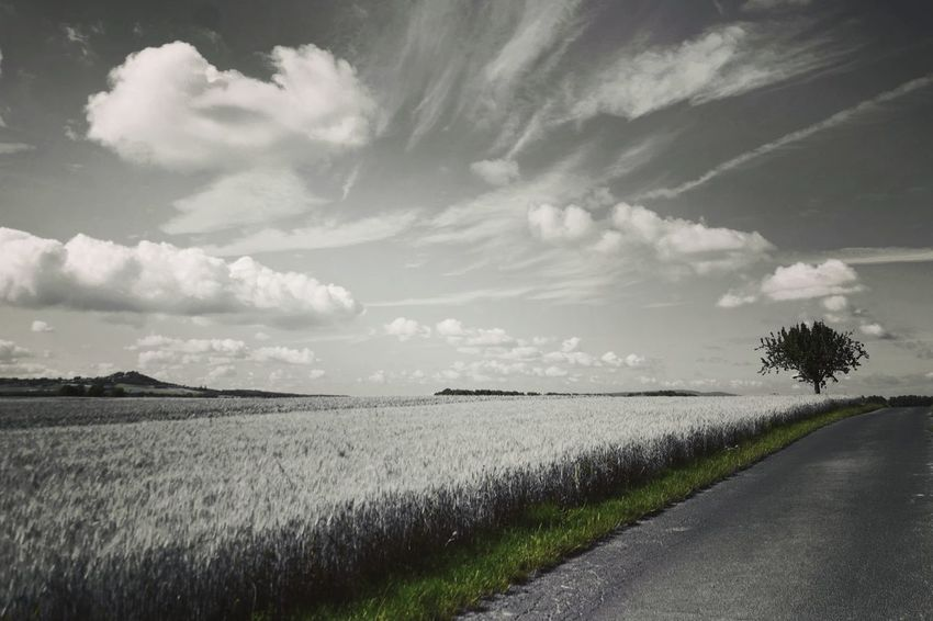 Grünstreifen Colorsplash Nature Photography My Point Of View Beauty In Nature Rural Scene Cereal Plant Agriculture Field Crop  Sky Landscape Empty Road Dramatic Sky Cultivated Land Atmospheric Mood Agricultural Field Moody Sky
