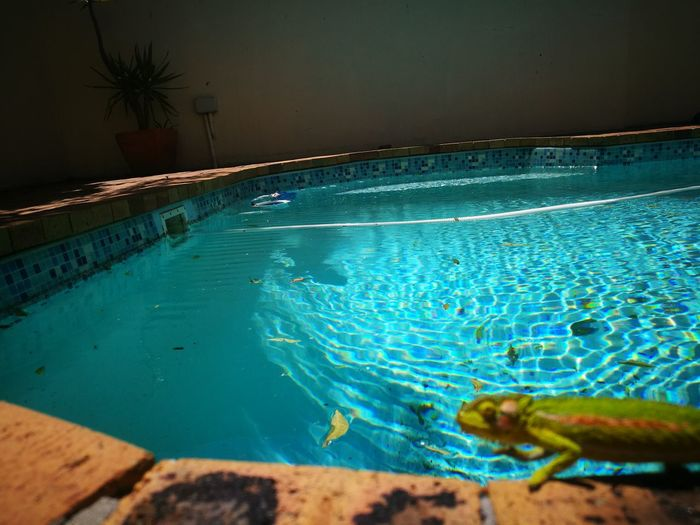 Outdoors Water Blue Swimming Pool Dragonsdoexist Exotic Pets Relax Chillout Beauty In The Ordinary