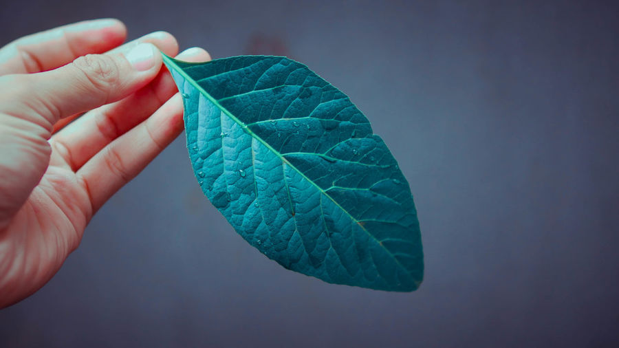 Cropped hand holding leaf