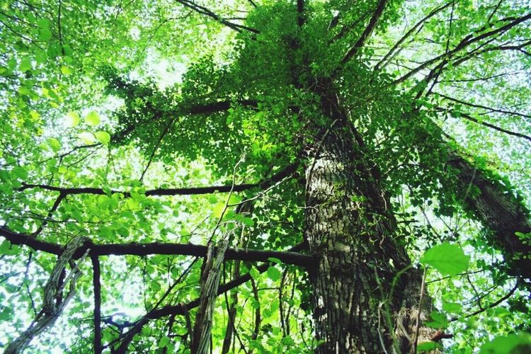 Green Forest Upper Branches Popular Photos