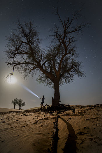 Silhouette tree on beach against sky