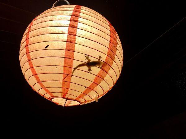 Gekko Illuminated Night Lighting Equipment Low Angle View Lantern No People Sphere Orange Color Paper Lantern
