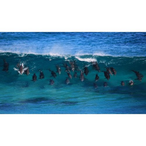 Got to surf fun waves with a pod of dolphins in the weekend...... Best expierence so fun!😊 🌊🐬 Taking Photos Check This Out Enjoying Life Lifes A Beach Adventure Ocean Waves Hanging Out Escaping OpenEdit Hi! Margaret river