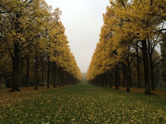 Park Herbst Fall Colors Colorful Symmetrical