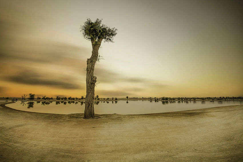 Beach Beauty In Nature Cloud Desert Horizon Over Water Lake Lake View Lakeshore Landscape Landscape_Collection Landscape_photography Landscapephoto Landscapephotographer Landscapephotography Landscaper Landscapes Longexposure Longexposure Shot Longexposurephotography Oasis Outdoors Sky Sunset Sunset_collection Tree
