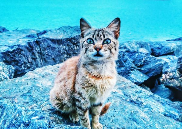 One Animal Looking At Camera Animal Themes Portrait Pets Domestic Animals Domestic Cat Mammal Outdoors Day Feline No People Nature Sitting Beauty In Nature Close-up Cat♡ Seascape Rocks And Water EyeEmNewHere EyeEm Gallery EyeEm Best Shots EyeEmNewHere