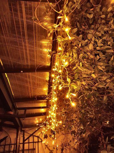#lights #christmaslights #christmas #hope #positivethoughts #positive #photography #lights #christmas #nightlight #ChristmasLights #positivethinking #joyful Colors #thinkpositive #outdoors #no People