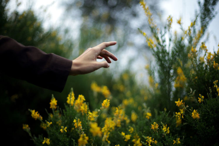 Cropped image of person on flowering plants on field