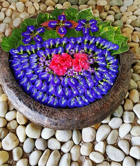 Petal pattern Flower Freshness Blue Celebration Nature Petals🌸