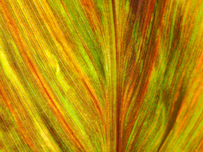Full frame shot of multi colored leaf
