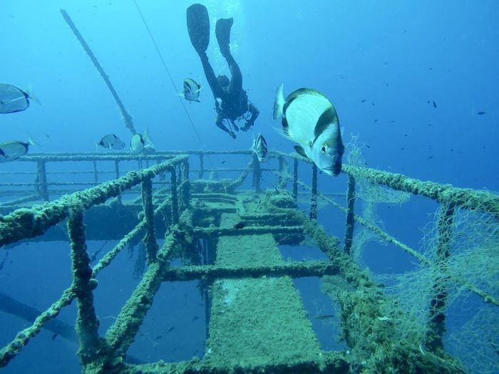 El Santuario Sea Underwater Water Sport Blue UnderSea Nature Aquatic Sport Scuba Diving Adventure