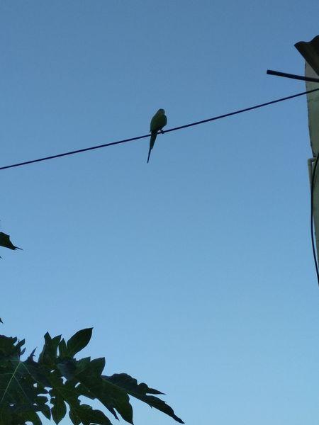 Parrot Perching Tree Branch Songbird  Bird Of Prey
