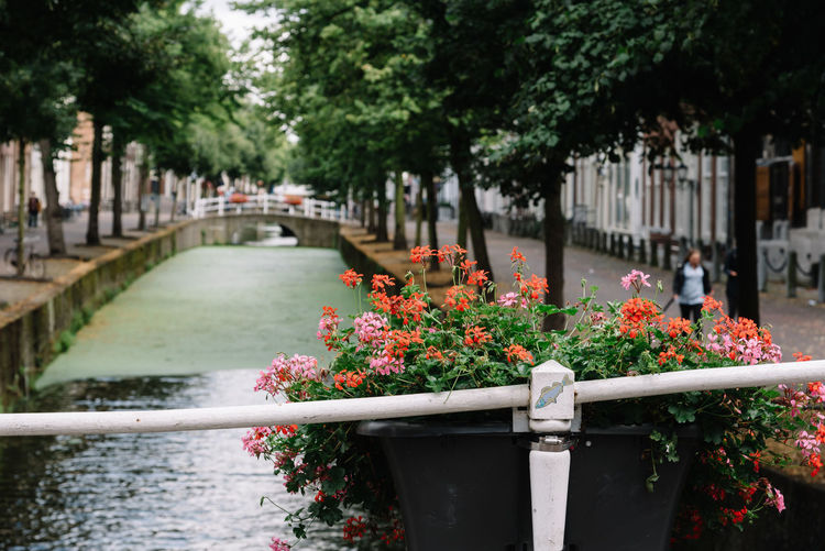 Flower Pot On Railing Against Canal In City