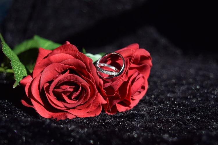 The rings Black