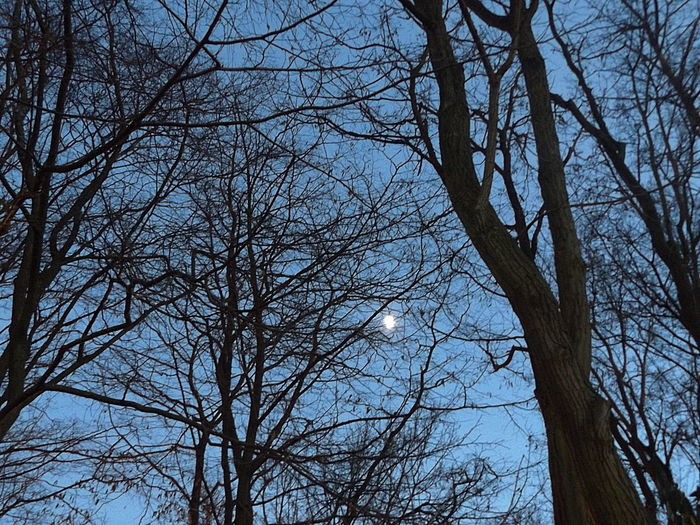 Moon within the Woods. Trees Nature Moon Outdoors Sky Low Angle View Cold Temperature Nature Lovers Tranquility On My Way Home Minimalmood Branch Winter