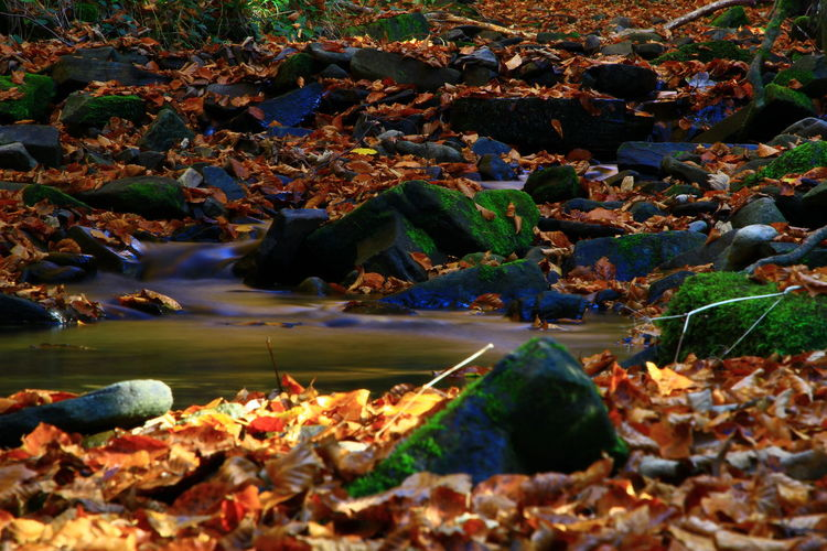 Water Rock No People Rock - Object Nature Day Solid Autumn Plant Part Land High Angle View Leaf Scenics - Nature Beauty In Nature Outdoors Change Sea Non-urban Scene Moss