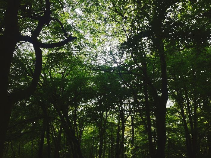 Swansea Trees Green Forest Sunlight Through Trees Sunset Nature Open Edit