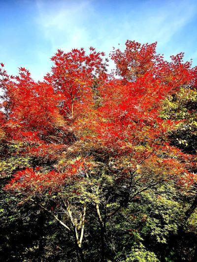 Autumn Autumn colors Red Sky Cloud - Sky Colorful Plant Life