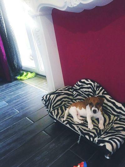 Doge Cute♡ First Eyeem Photo