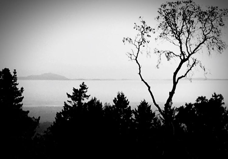 Tree Silhouette Nature Tranquility Beauty In Nature Sky No People Growth Landscape Outdoors Scenics Branch Day Forest Silhouette Tranquil Scene Sunrise Silhouette Sunrise Beauty In Nature Sunday Morning Relaxation Time Heaven Heaven And Earth Black And White Friday