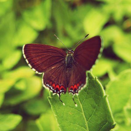 butterfly effect Butterfly EyeEm EyeEm Nature Lover EyeEm Gallery OpenEdit Leica D-lux Typ109 Nature On Your Doorstep in my garden in Himachal, India