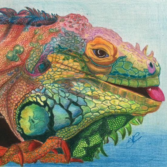 Lizard drawing Animal Themes Multi Colored Vibrant Color Close-up Animal Head  Colorful Creativity ArtWork Artist Pencil Drawing My Artwork Nature_collection Animal_collection Artworks EyeEm Nature Lover Coloured Pencils Art #illustration #drawing #draw #tagsforlikes #picture #photography #artist #sketch #sketchbook #paper #pen #pencil #artsy #in Artistic Expression No People MyArt Carandache Art, Drawing, Creativity Headshot Animal Zoology