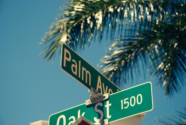 America Clear Sky Close-up Communication Day Direction Florida Guidance Key West Low Angle View No People Oak Street Outdoors Palm Avenue Palm Tree Road Sign Sky Street Name Sign Text Tree USA Western Script