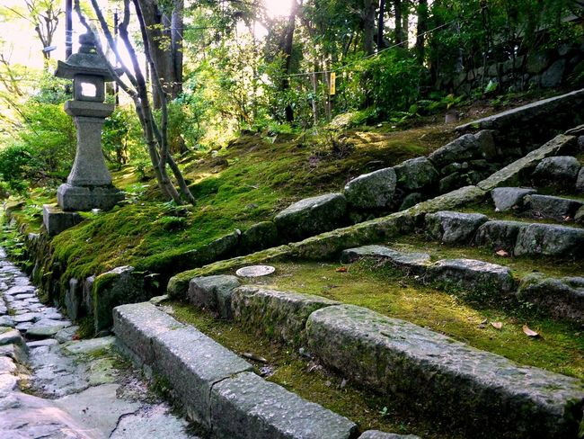 Japan Japanese Garden Moss Old Stone Lantern Stone Steps Tranquil Scene Tranquility Travel Destinations