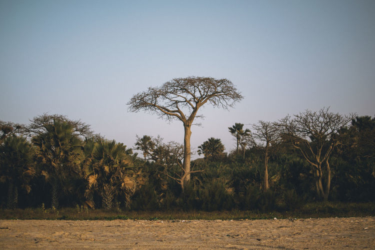 Tree Plant Sky Land Growth Tranquility Nature Beauty In Nature Environment Field Day Tranquil Scene Landscape No People Scenics - Nature Clear Sky Non-urban Scene Outdoors Grass Copy Space Arid Climate EyeEm Best Shots EyeEmNewHere EyeEm Gallery Africa