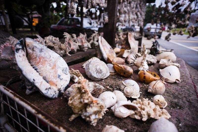 High Angle View Of Seashell On Table For Sale
