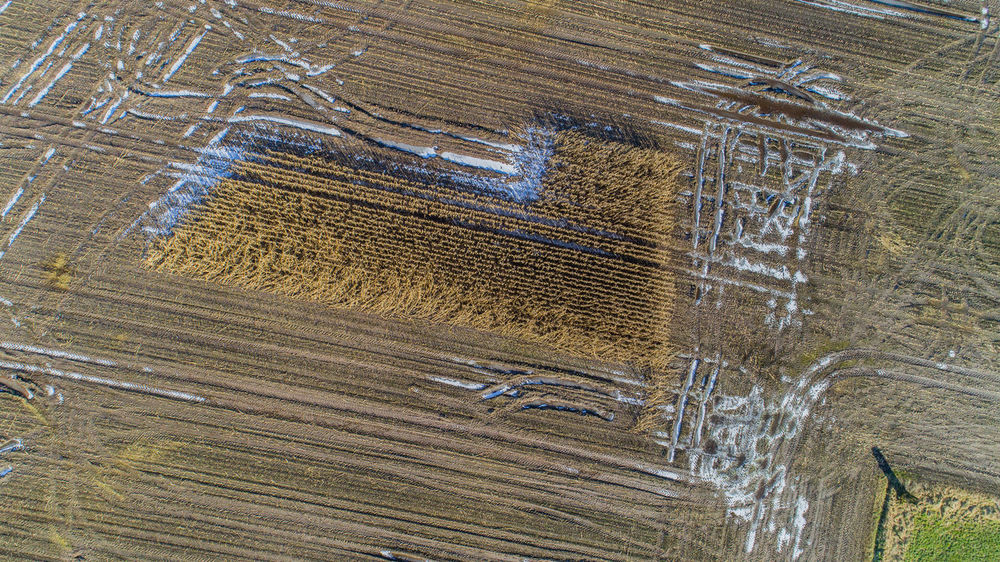 Aerial view of Corn fields after a rainy season Agricultural Damage Agricultural Economy Agriculture Cloud Continuous Rain Field Harvest Break Harvesting Costs Rain Weather Aerial View Agricultural Corn Field Drying Environmental Probleme Fields Floods Harvest Landscape Meadow Mud Mushy Puddle Rain Shower Wet