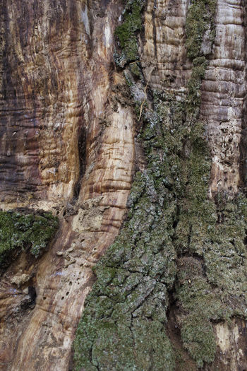 Autumn Colors Natural Pattern Tree Trunk Bark Texture Forest Trees Green And Brown Naturelovers Texured Brown Background