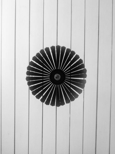 Room Day Whiteandblack Minimalism Home IKEA Tree EyeEmNewHere EyeEmNewHere Welcome To Black