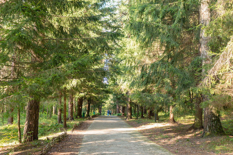 Footpath in the forest, Russia, Polenovo Pine Russia Russia. Polenovo Tula Oblast Beauty In Nature Day Forest Landscape Museum Nature No People Outdoors Pathway Polenovo Road Scenics Strakhovo The Way Forward Tranquility Tree