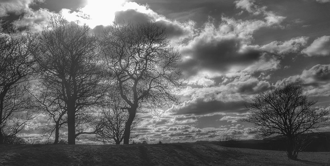 Showcase March Spring Black And White Black And White Photography Park Trees Sky Been A While