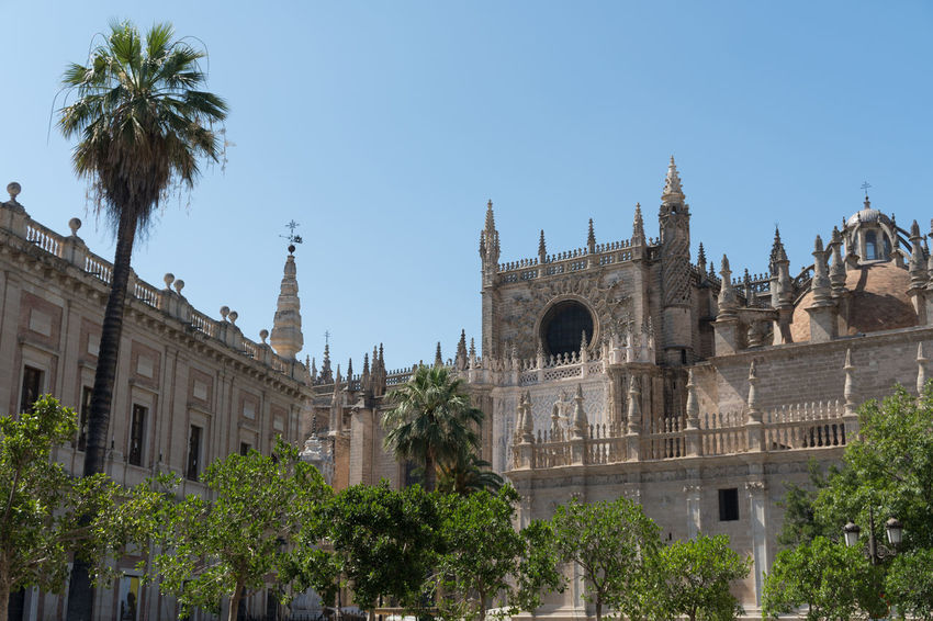Cathedral in Sevilla Architecture Belief Building Building Exterior Built Structure City Clear Sky Day History Low Angle View Nature No People Outdoors Palm Tree Place Of Worship Plant Religion Sky The Past Tree Tropical Climate