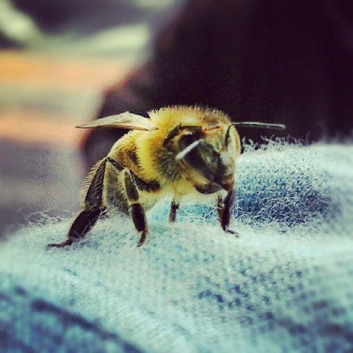 Bee... Que ha