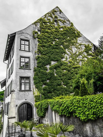 Architecture Built Structure Building Exterior Sky Building Plant Nature Tree Green Color Outdoors Day