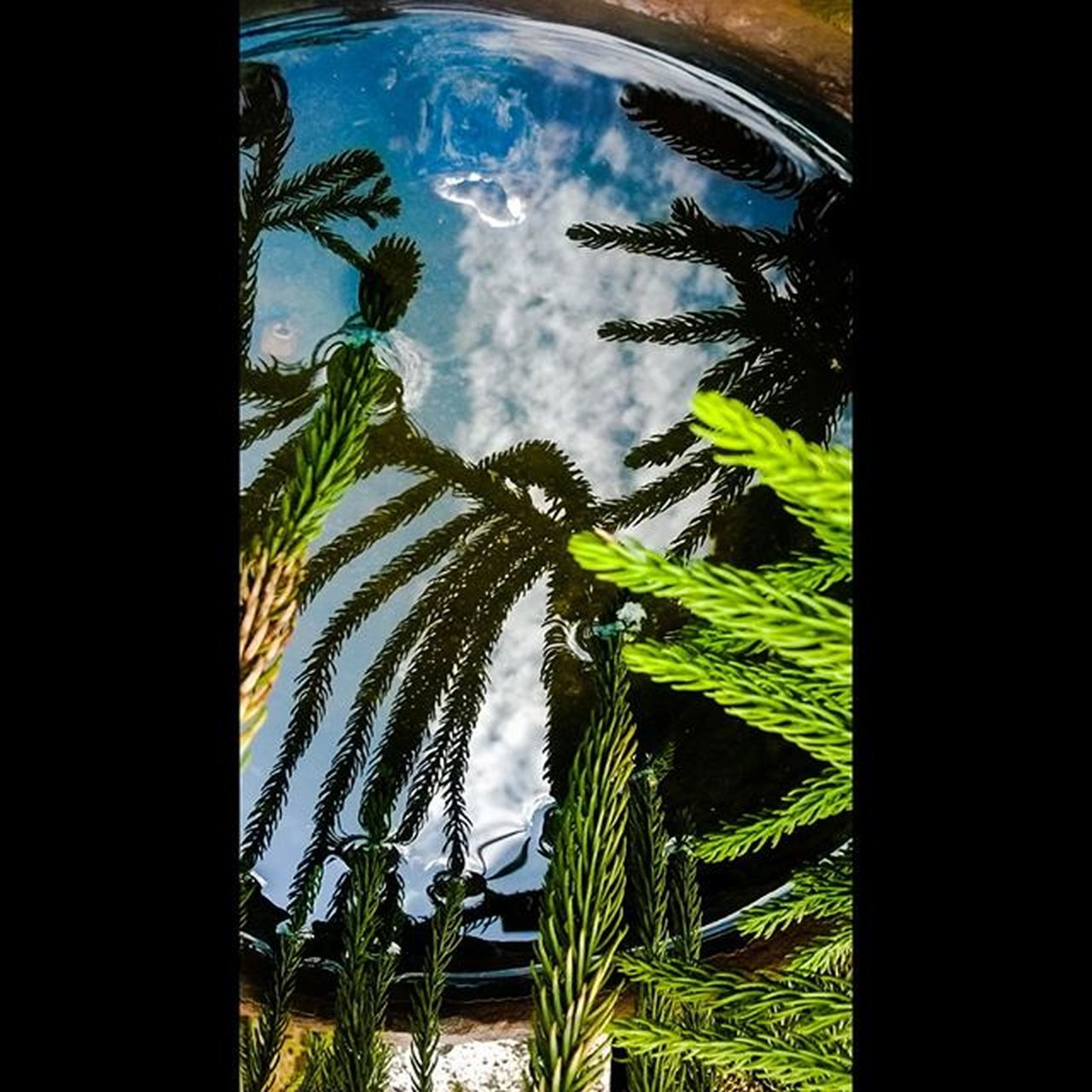 palm tree, no people, tree, day, window, growth, nature, plant, outdoors, sky, beauty in nature, close-up