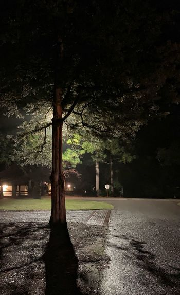 Street lights by trees at night