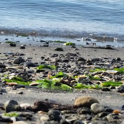 Pacific Northwest  Shore Beach Coastline Water Outdoors
