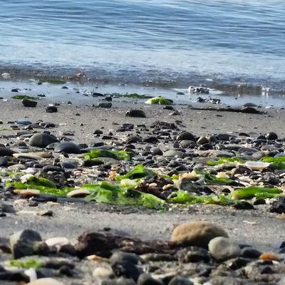 Pacific Northwest  Shore Beach Coastline Water Outdoors