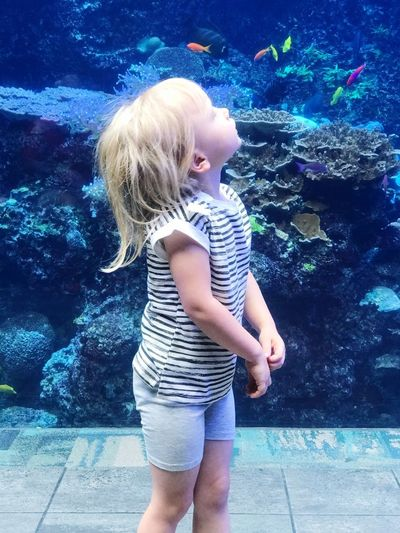 Wonder Georgia Aquarium  5 Year Old 4 Year Old Fascination Childhood Wonder Aquarium Childhood Child One Person Girls Real People Blond Hair Standing Full Length Casual Clothing