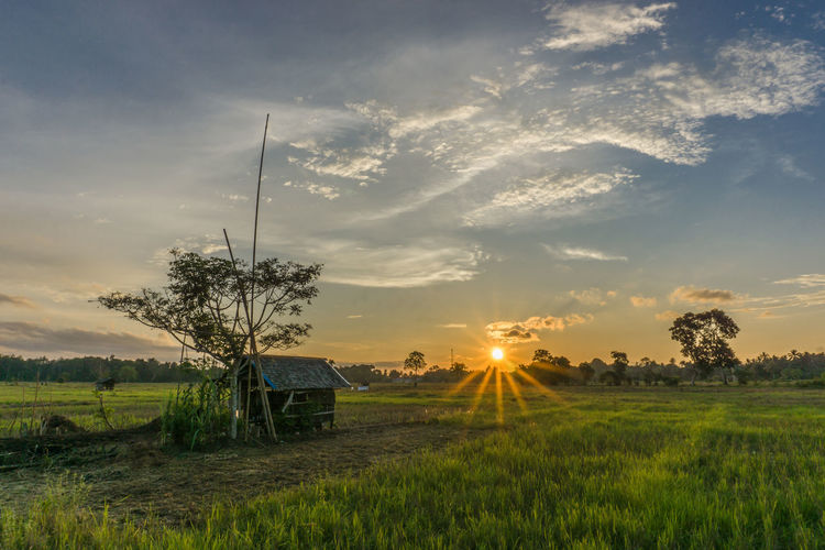 Yesterday Sunset Landscape Field Scenics Tranquil Scene Sun Rural Scene Tranquility Tree Agriculture Beauty In Nature Sunbeam Sky Growth Farm Sunlight Plant Crop  Nature Non-urban Scene Sun Star Star Burst Outdoors The Great Outdoors - 2018 EyeEm Awards A New Beginning