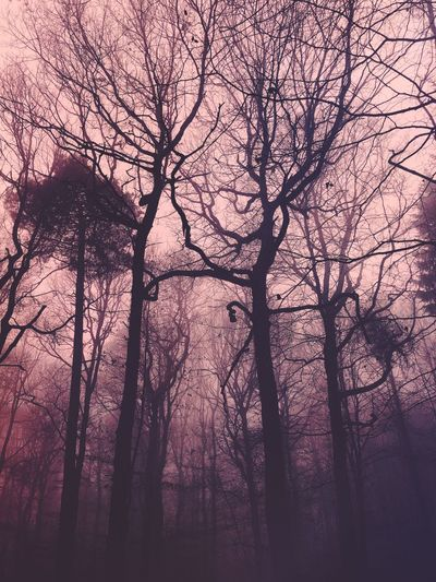 Foggy forest 🌳 Foggy Landscape Foggy Hiking Tree Plant Branch Silhouette Low Angle View Beauty In Nature Nature No People Scenics - Nature Idyllic Bare Tree Tree Trunk Tranquil Scene Tranquility Outdoors