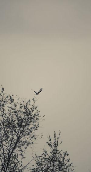 无事经湖畔,徒坐耗时间,太阳坠下树,喜鹊飞上天。 bird Flying Bird Nature No People Low Angle View Silhouette Outdoors