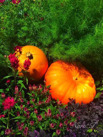 Pumpkin Halloween Osaka Station IPhoneography Tadaa Community Iphone6